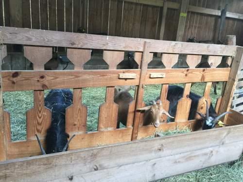 Comedero pasillo cabras alto (3)
