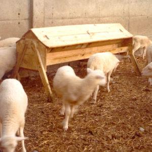 Tolva para pienso para corderos