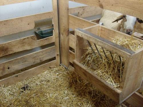 chiquero-post-parto-ovejas-corderos-nacidos