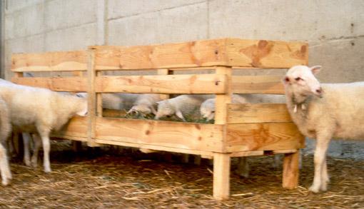 comedero-forraje-pienso-ovino-ovejas