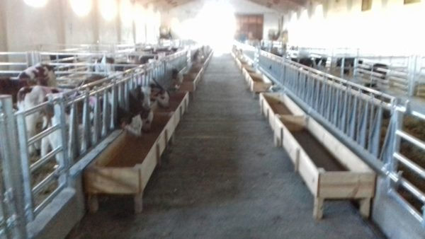 comedero-para-vacas-pienso-forraje