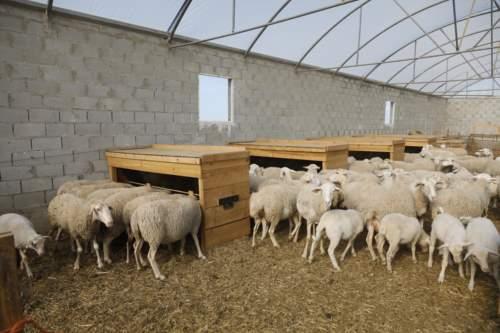 tolva pienso ovejas corderos
