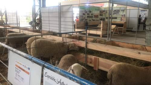FEMOGA-comederos-ovejas-tolvas (2)