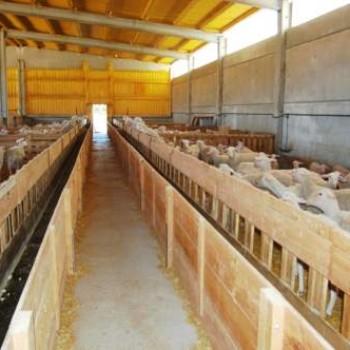 instalacion-nave-ovejas-amarres (2)