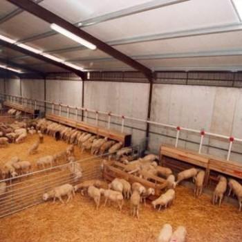 instalacion-nave-cebadero-corderos (2)