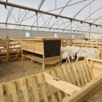 tolva pienso ovejas corderos MS8600 (6)
