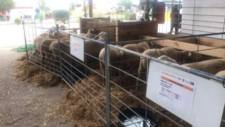 FEMOGA-comederos-ovejas-tolvas (1)