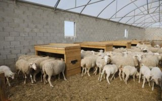 tolva pienso ovejas corderos MS8600 (7)