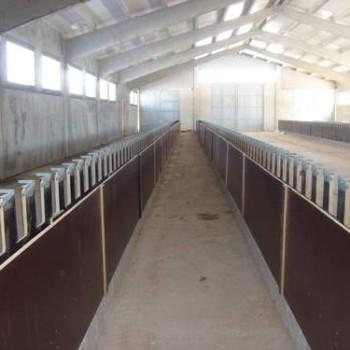 comederos-amarre-autoblocante-vacunacion (2)