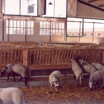 cebadero corderos tolvas pienso y comedero rastrillo (5)